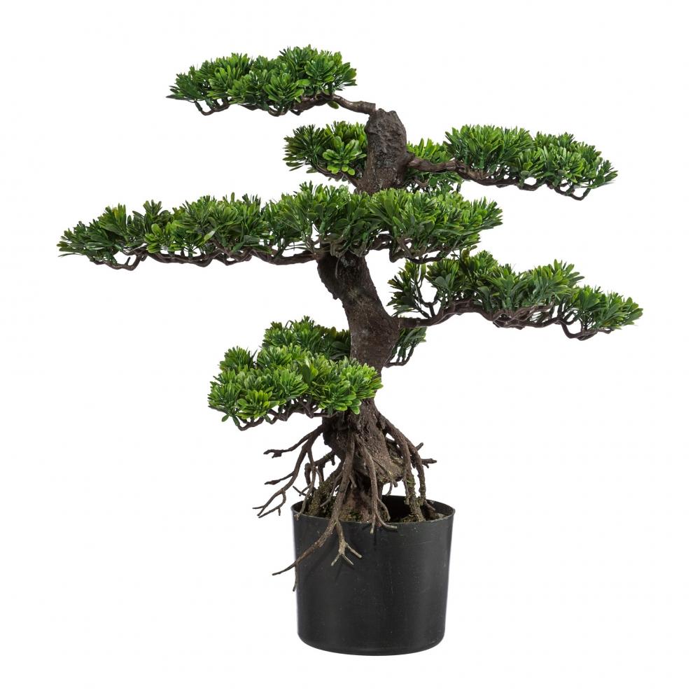 Bonsai Szi 75 cm