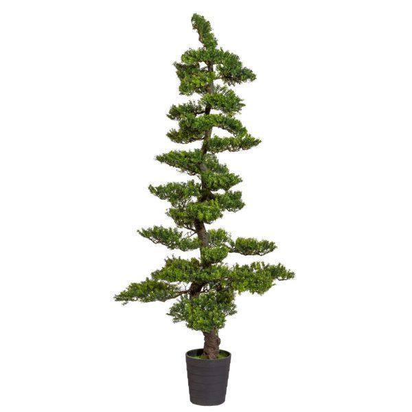 Bonsai Herbaciany 180 cm